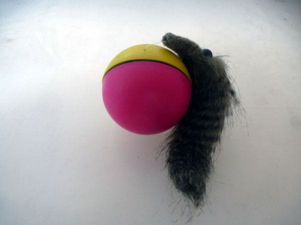 Beaver Ball