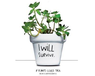 Pflanzen Übertopf<br>- I will Survive