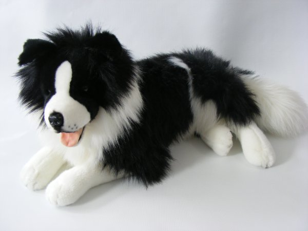 Liegender Border<br>Collie, 60 cm