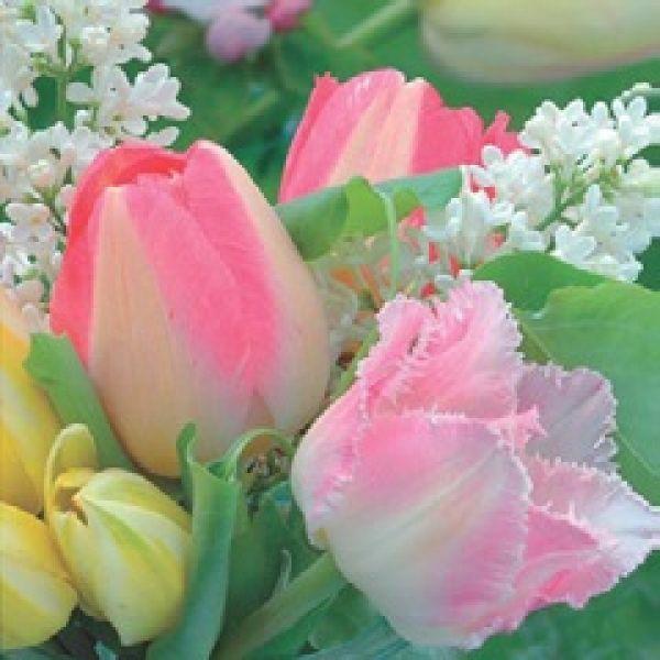 Serviette Dutch<br>Tulips 33x 33cm