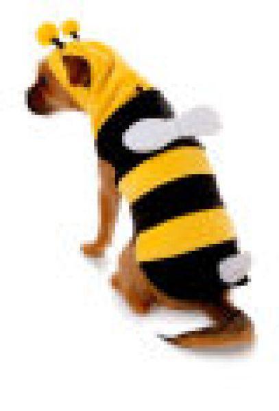 Faschingskostüm Biene für den Hund
