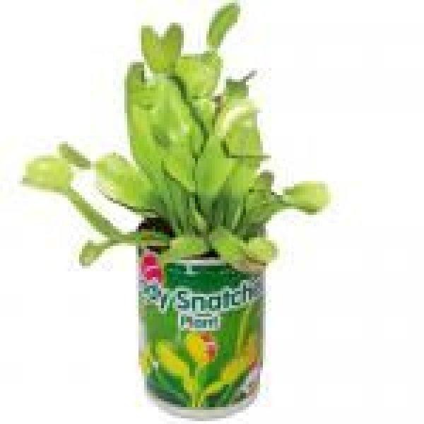 Venus Flytrap -<br>voracious plant