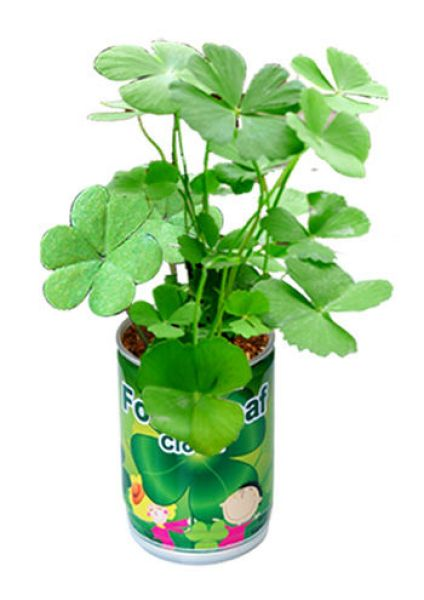 Four-leaf clover<br>with cans