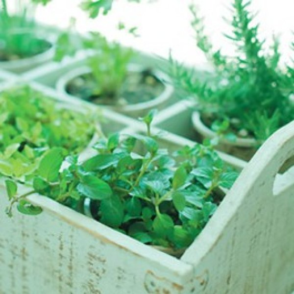 Spices plant pots Pack 4