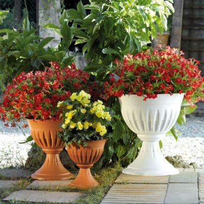 Alba Blumen-Cup O 25 cm