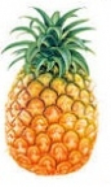 E-Liquids:<br>Pineapple 10ml, 0mg