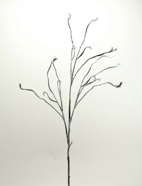 CORKSCREW WILLOW, 125 cm