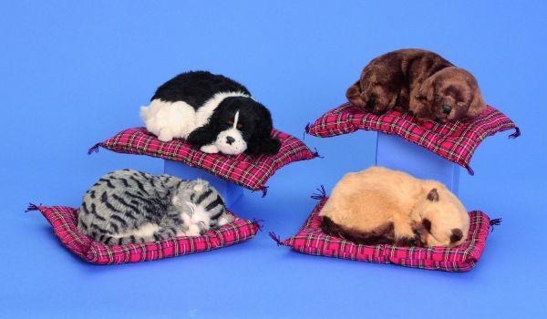 Hund + Katze auf<br> Decke Plüsch Deko<br>Home & Living